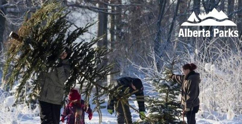 Why not cut your own Christmas tree this year?